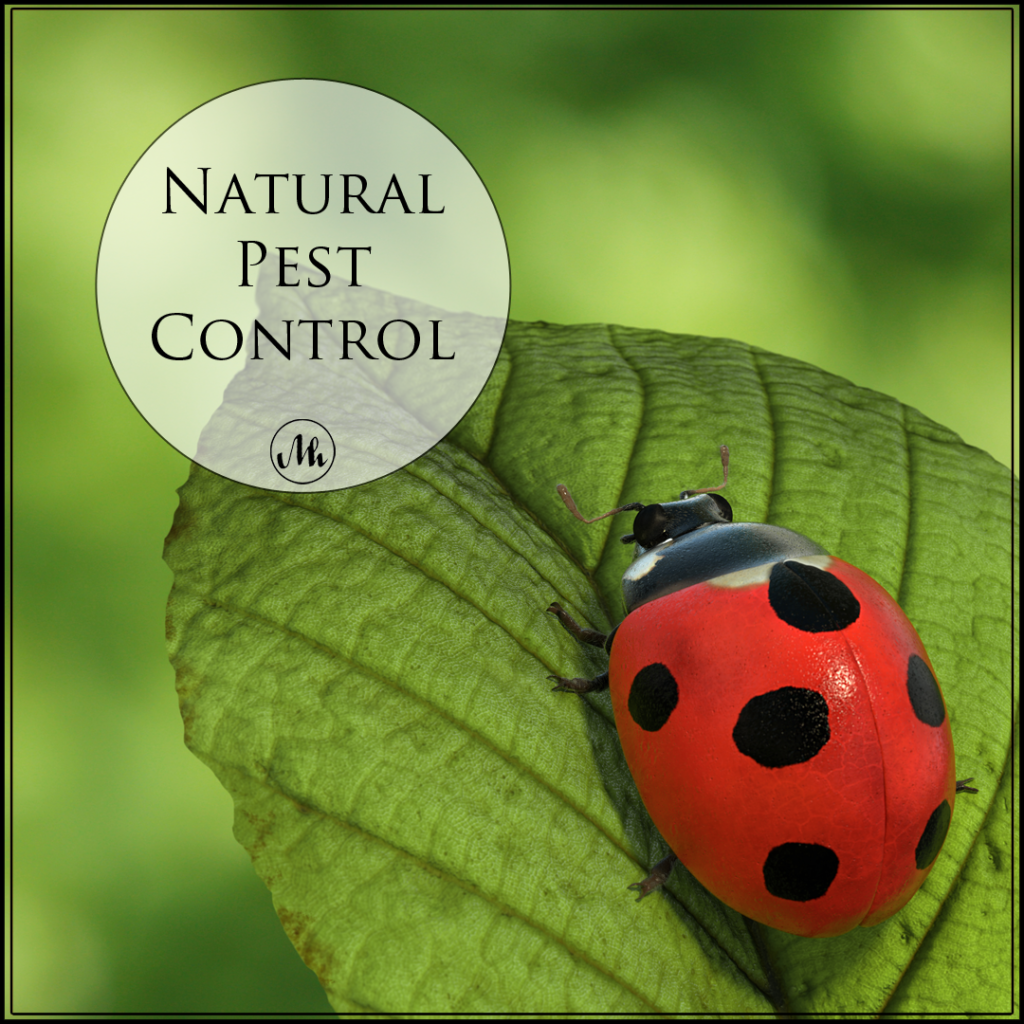 Ladybugs: Natural Pest Control